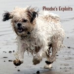 Phoebe Coffee table Book cover by Memories4You.com.au